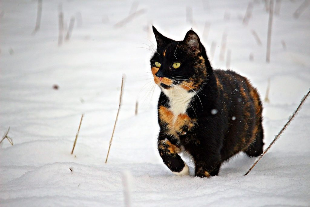 Feral Cats: Surviving Winter Unlike Domestic Kitties